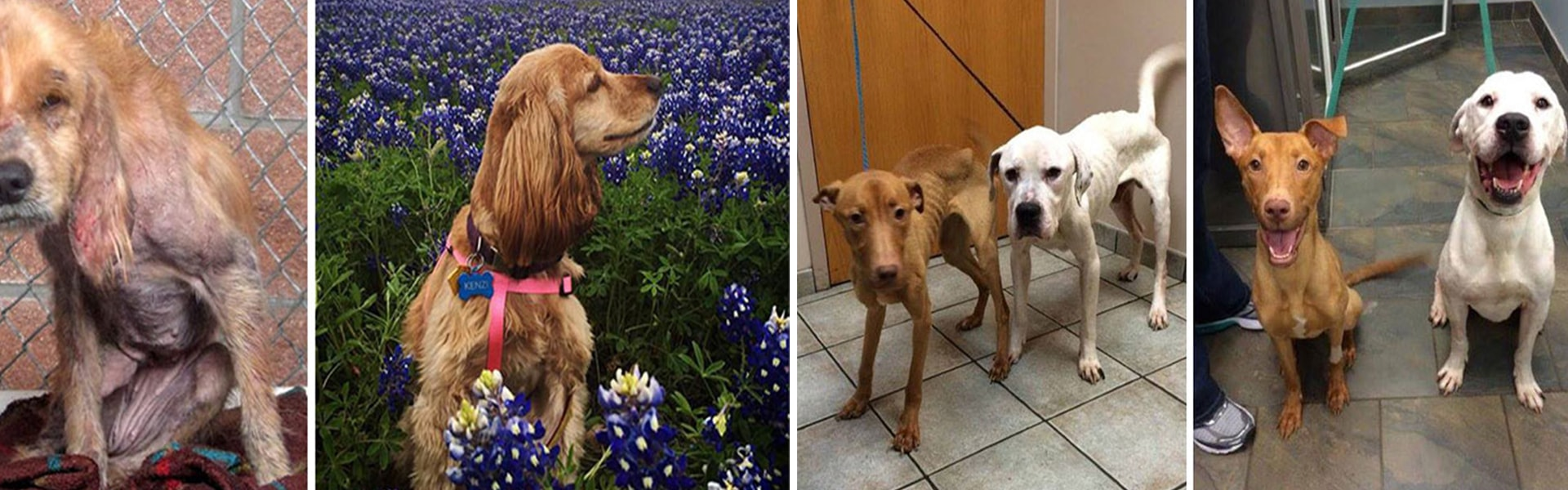 15 fotos de perritos antes y después de ser adoptados (Part 2)-NATION