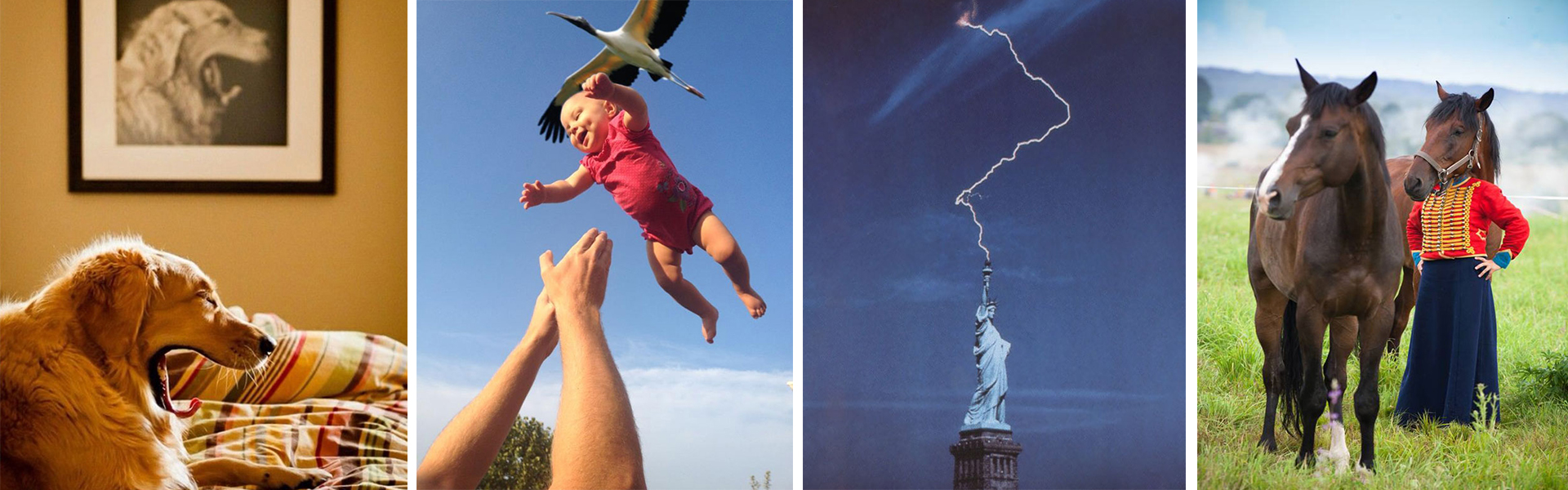 25 fotos tomadas en el momento perfecto-NATION