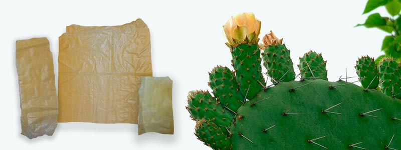 Investigadora mexicana crea plástico biodegradable hecho a base de nopal - Nation