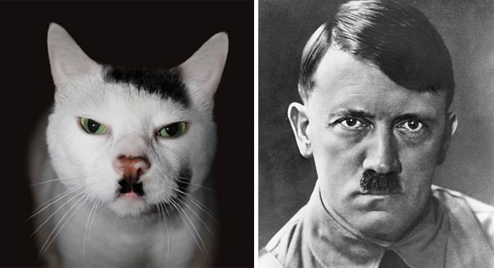 12 gatos que lucen totalmente como otra cosa-NATION