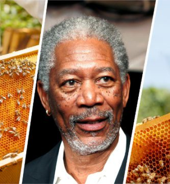 Morgan Freeman convierte su rancho de 124 acres en un santuario de abejas-NATION