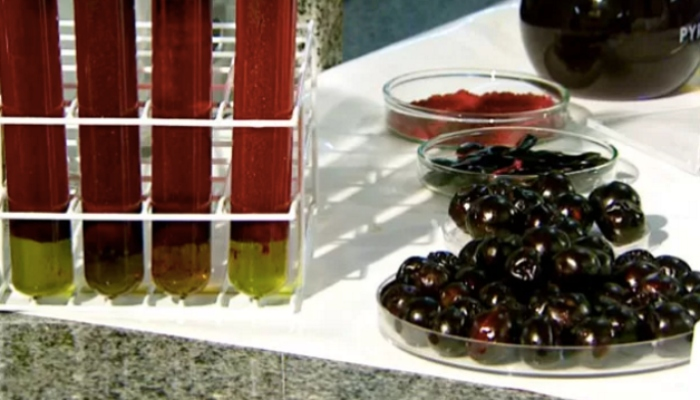 Extracto de Jabuticaba se convierte en remedio para diabetes y colesterol-NATION