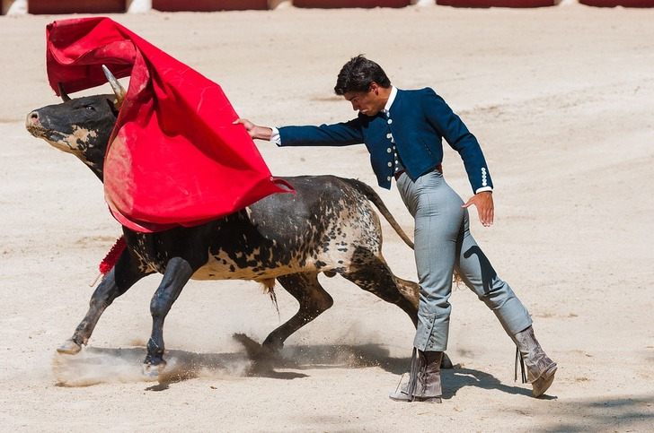 Estado mexicano prohibe corridas de toros y pelas de gallos-NATION