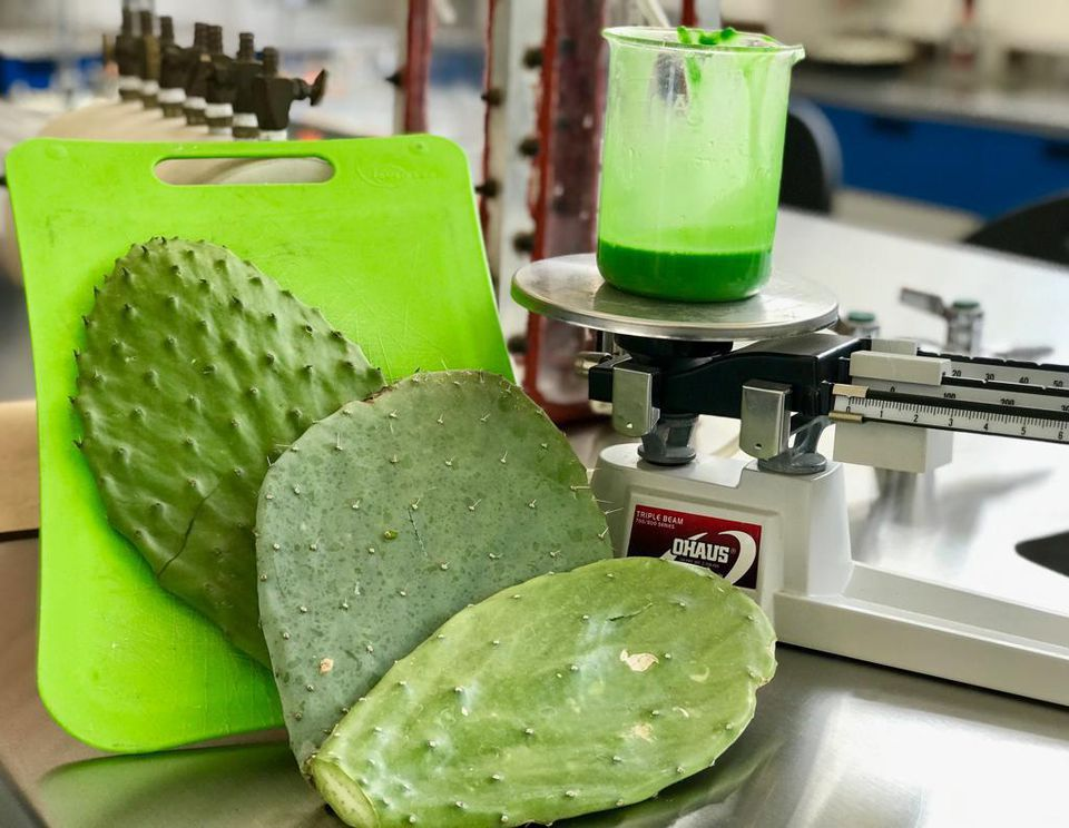 Mexicana crea un innovador plástico biodegradable hecho de nopal-NATION
