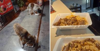 Restaurante peruano prepara exquisitos menús gratis para perritos callejeros-NATION